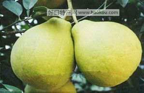 龙皇洞沙田柚