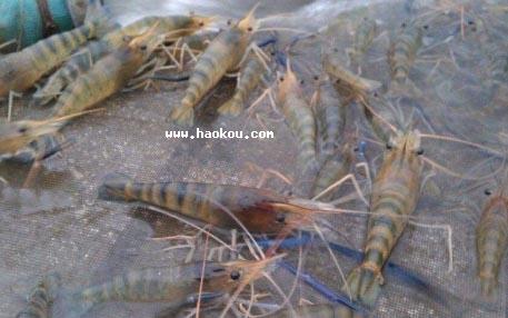 南沙罗氏沼虾